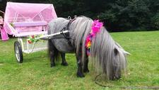 Unicorn hire  in London  and Essex